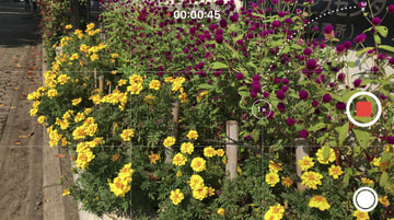 これがiPhone 8 Plusの実力か! 生まれ変わった動画と写真、そしてコーデック 1×カメラで撮影中にズームしようとしたところ