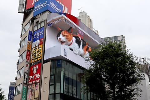 猫 が しゃべる 動画