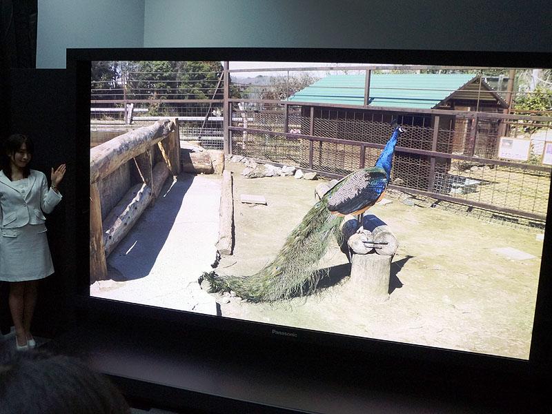 スーパーハイビジョン 8K UHDTV2YouTube動画>9本 ->画像>114枚